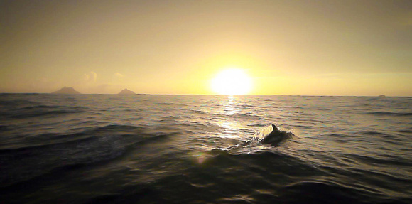 Dolphin & Skelligs