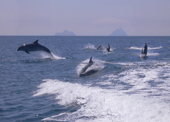 Dolphins off Skelligs